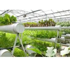 中农共信有机瓜菜工厂是怎么运营的 靠不靠谱