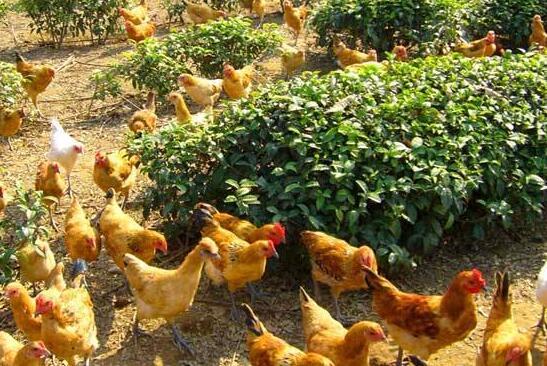 农村养殖又出新政策!种养结合成为补贴热点!