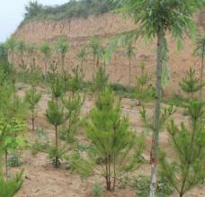 2019年全国已完成造林1.06亿亩
